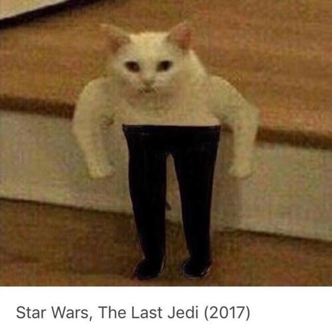 Cat - Star Wars, The Last Jedi (2017)
