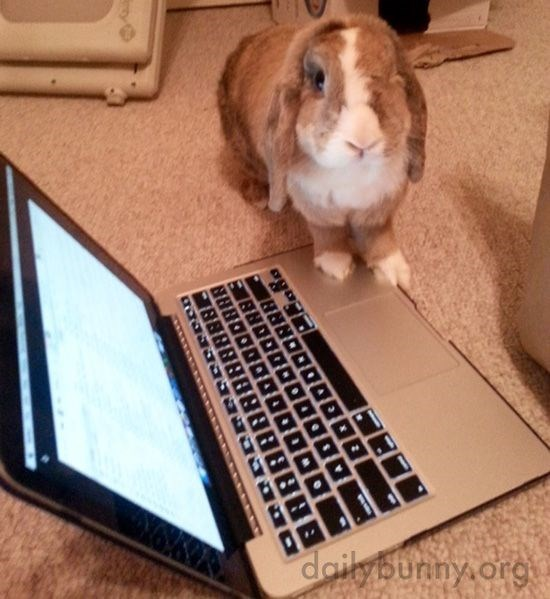 Rabbit - dailyburiny.org BBBBBBBB8B888 DDDDDDO00DRB8 DODDRBE DRORRA