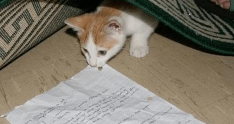 Cat - .
