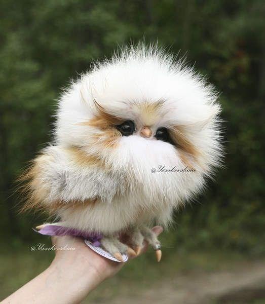 furry owl