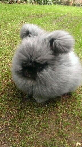 very fluffy dog