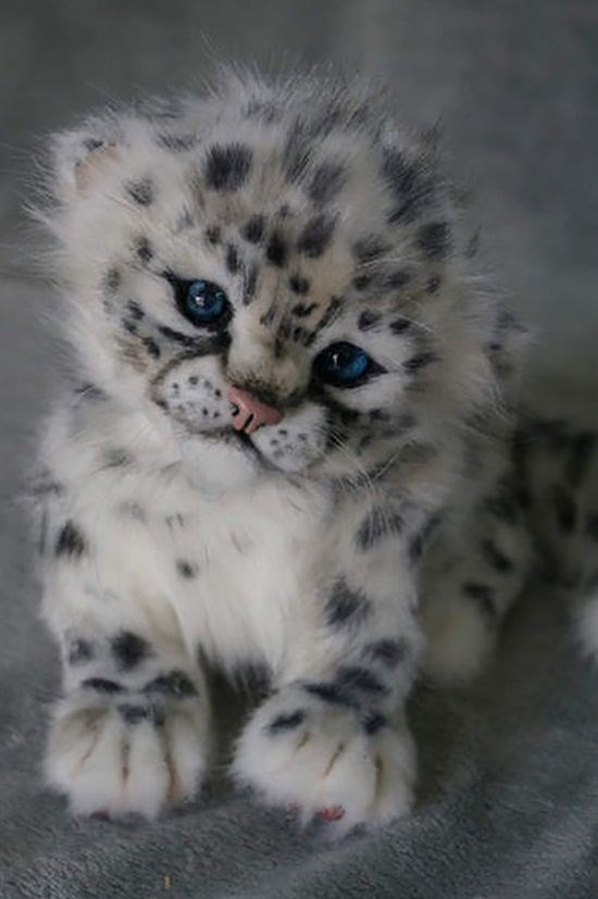 baby cheetah or leopard