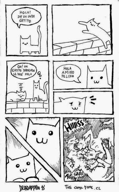 hola soy un lindo gatito ahi hay otro gatito le dire hola