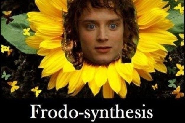 meme - Sunflower - Frodo-synthesis