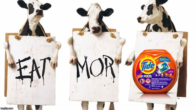 Dairy cow - EN MOR sVLOOK NOUNEA STYLE Vide PODS 31 INN PMIN giras impillp.com