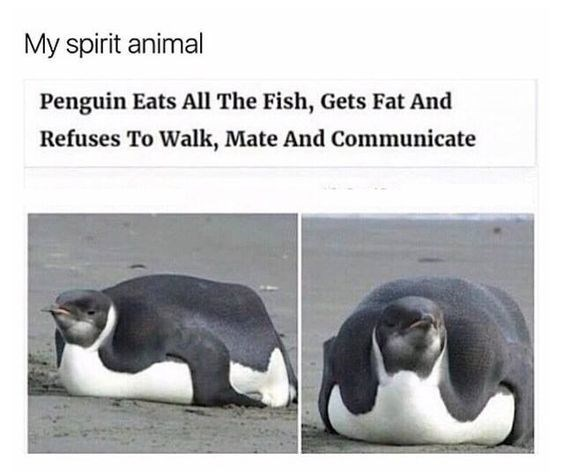 Adaptation - My spirit animal Penguin Eats All The Fish, Gets Fat And Refuses To Walk, Mate And Communicate