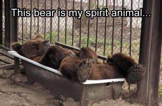 Adaptation - This bear is my spirit anima...