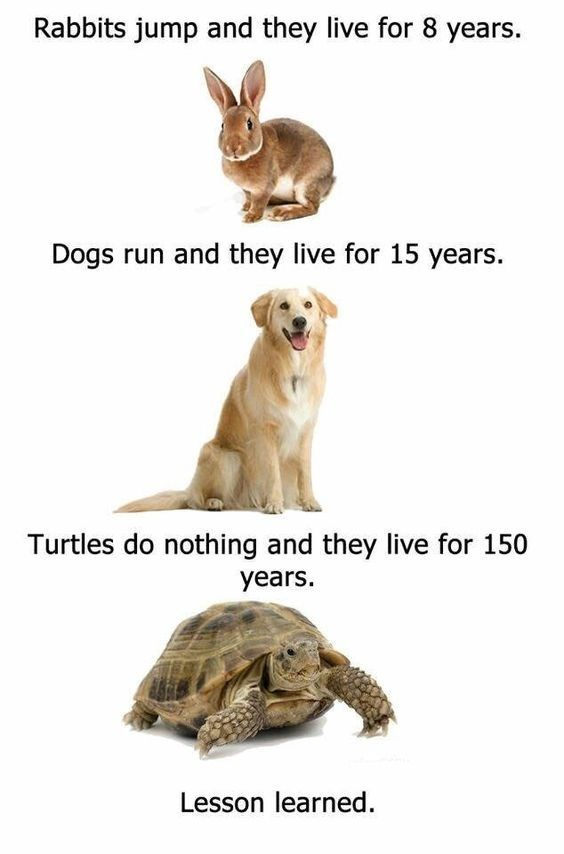 Tortoise - Rabbits jump and they live for 8 years. Dogs run and they live for 15 years Turtles do nothing and they live for 150 years Lesson learned.