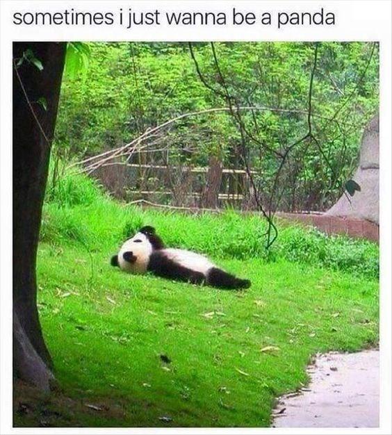 Panda - sometimes i just wanna be a panda