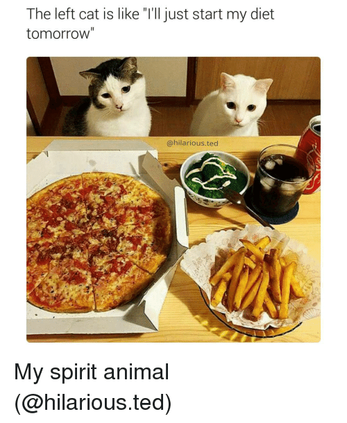 """Food - The left cat is like """"I'll just start my diet tomorrow"""" @hilarious.ted My spirit animal (@hilarious.ted)"""