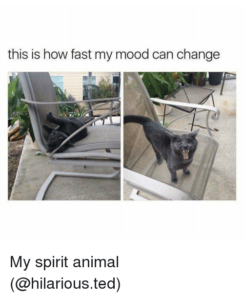 Tree - this is how fast my mood can change My spirit animal (@hilarious.ted)