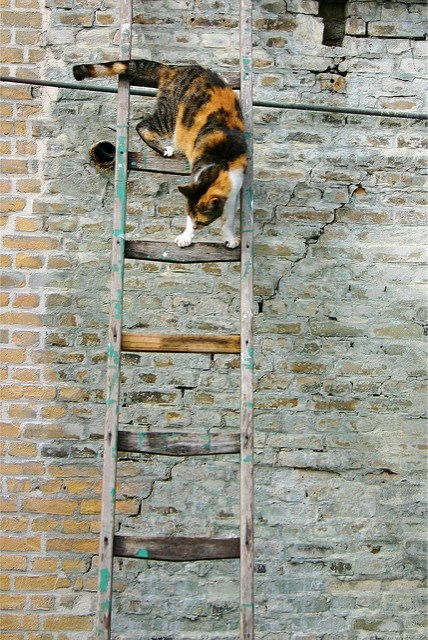 cute cat - Wall