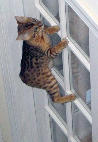 cute cat - Cat
