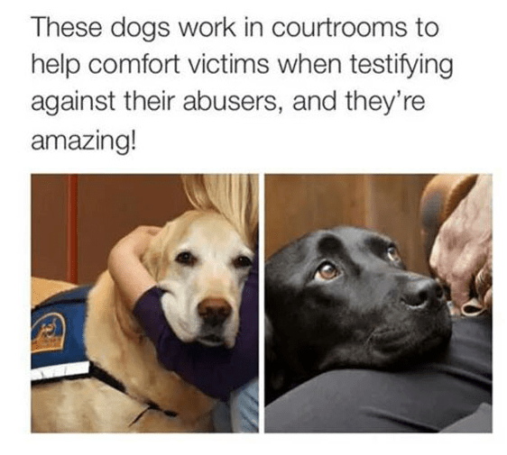 emotional support dogs that help witnesses and victims in the courtroom