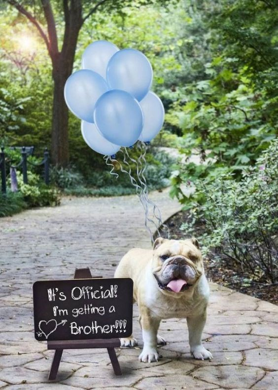 Dog - 's Official! f'm getting a Brother!!!