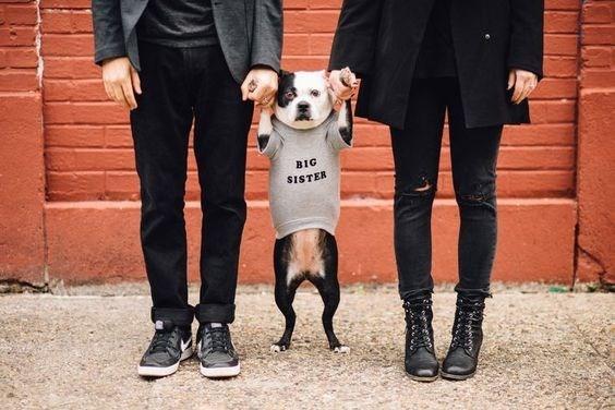 Dog - BIG SISTER
