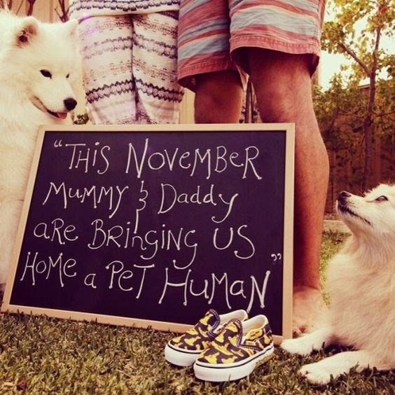 "Canidae - ""THIS NOVEMBER are BRihgiNG US HOME a PeT HuaN"