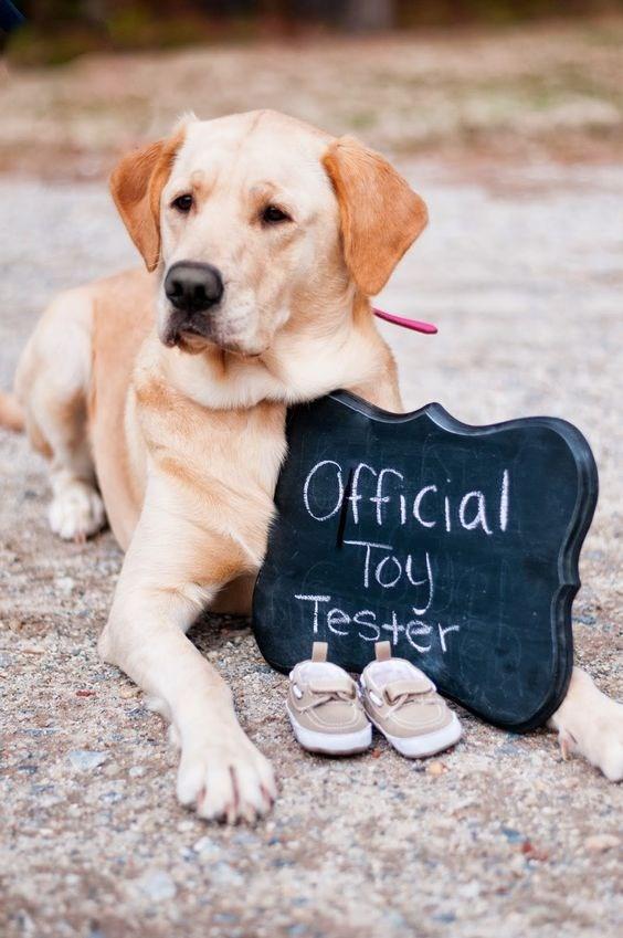 Dog - Official Toy Testěr