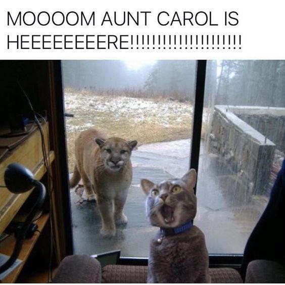 Lion - MOOOOM AUNT CAROL IS !!!I HEEEEEEEERE!!!!!!!!||