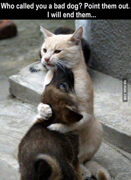 Cat - Who called you a bad dog? Point them out. I will end them... VIA 9GAG.COM