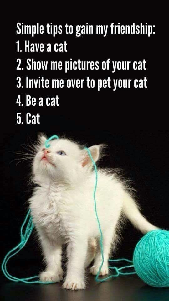 Cat - Simple tips to gain my friendship: 1. Have a cat 2. Show me pictures of your cat 3. Invite me over to pet your cat 4. Be a cat 5. Cat