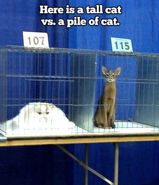 Cat - Here is a tall cat Vs. a pile of cat. 107 115