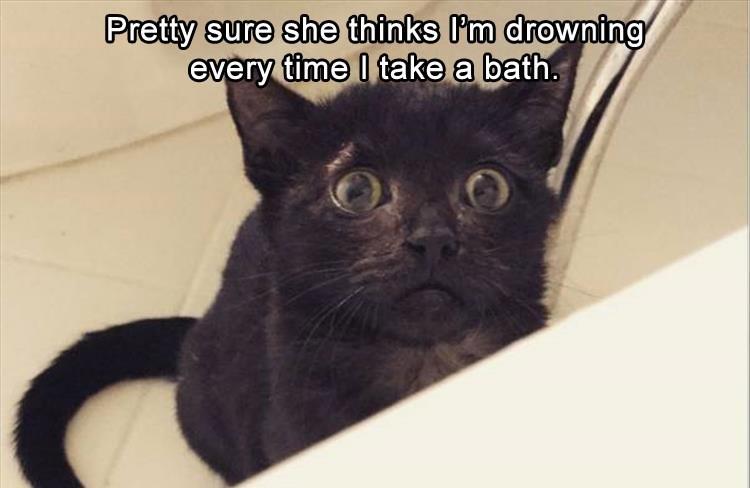Cat - Pretty sure she thinks P'm drowning every time I take a bath.