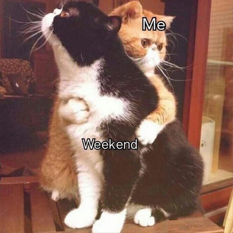 Cat - Me Weekend