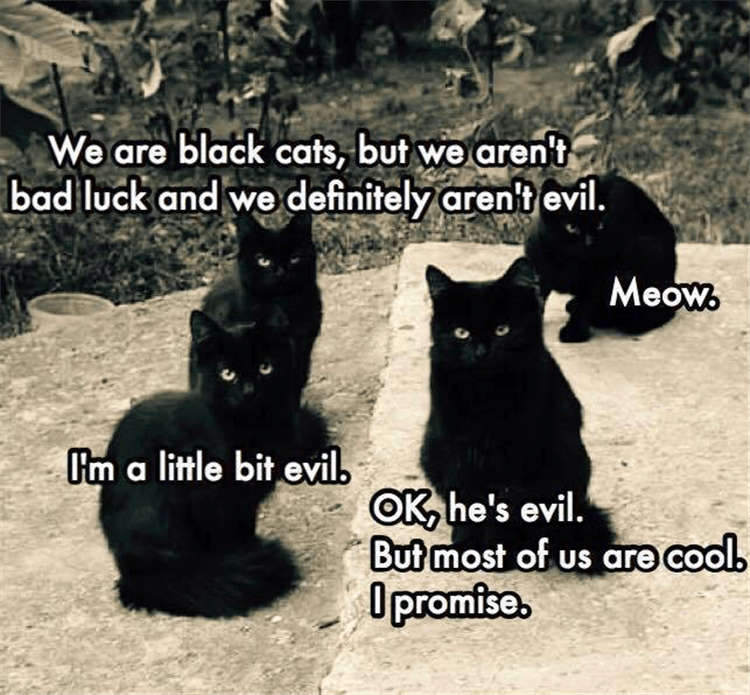 Cat - We are black cats, but we aren't bad luck and we definitely aren't evil Meow Im a little bit evil OK he's evil. But most of us are cool Opromise