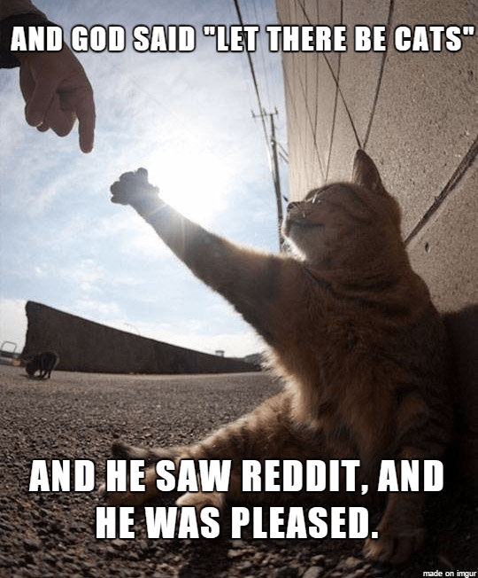 """Photo caption - AND GOD SAID """"LET THERE BE CATS AND HE SAW REDDIT, AND HE WAS PLEASED. made on imgur"""