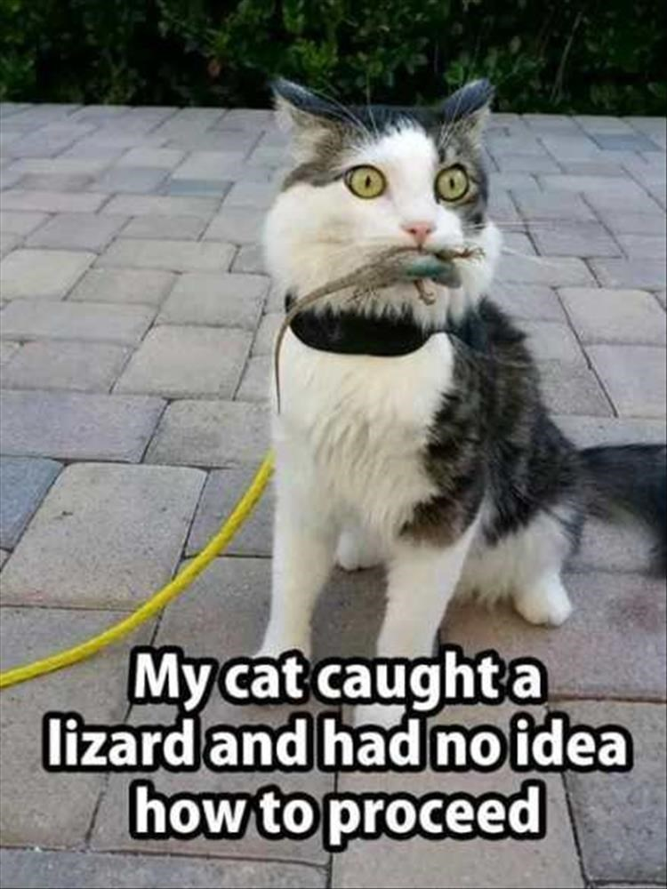 Cat - My cat caught a lizardand had no idea how to proceed