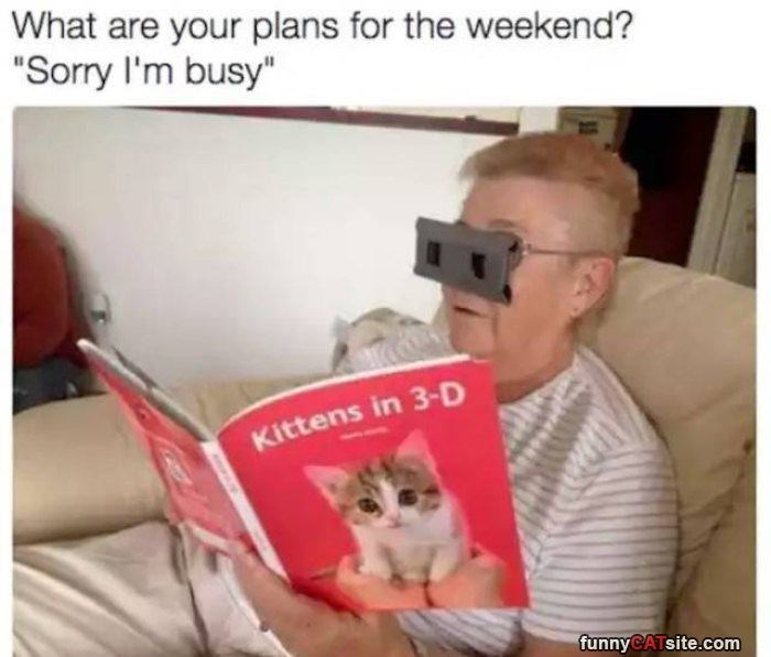 """Cat - What are your plans for the weekend? """"Sorry I'm busy"""" Kittens in 3-D funnyCATsite.com"""