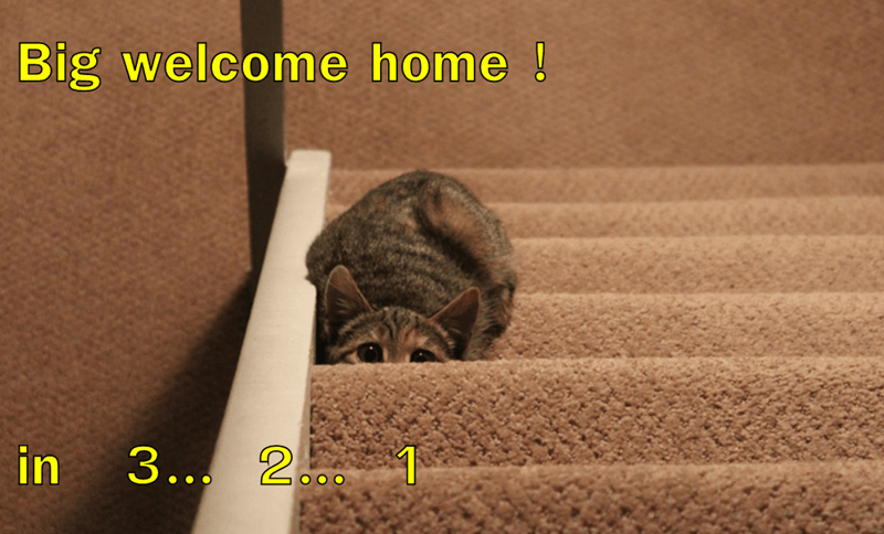 Text - Big welcome home! 3.. 2 1 in