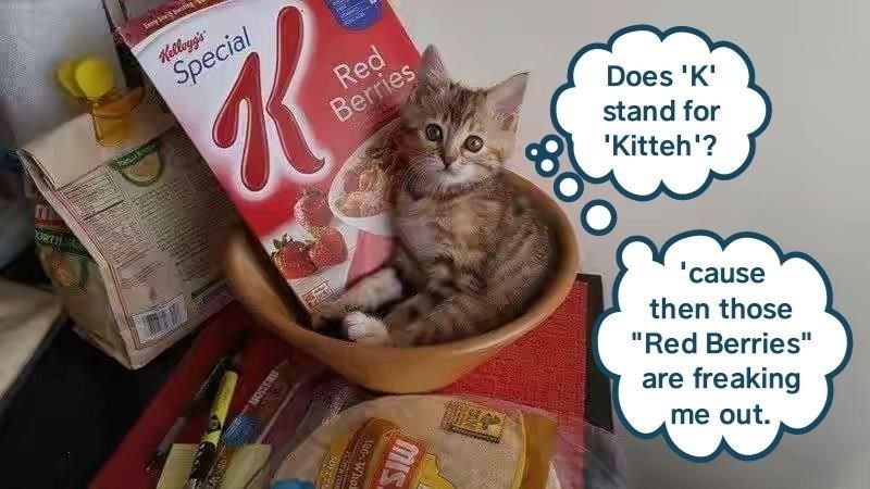 """Cat - Waion Special Red Berries Does 'K stand for 'Kitteh'? ORTI b 'cause then those """"Red Berries"""" are freaking me out. MIS"""