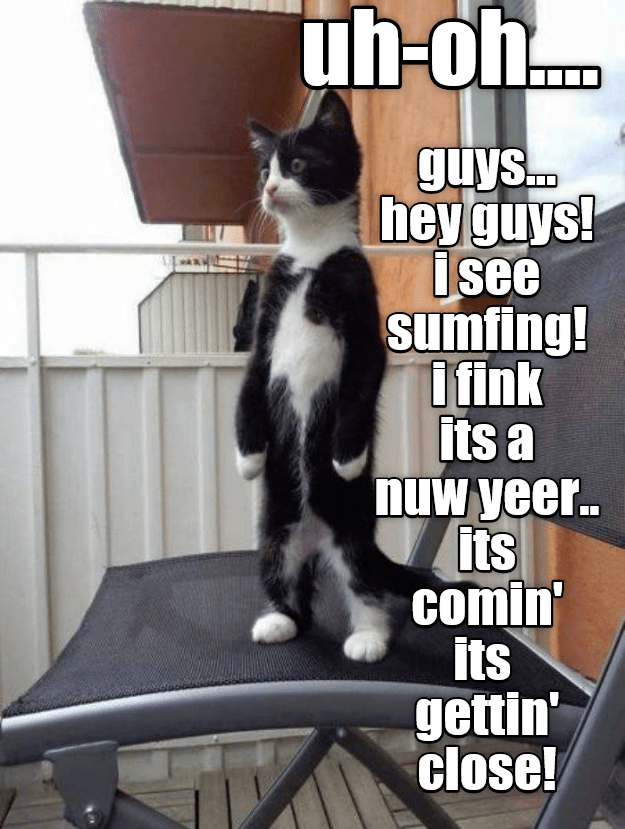 Cat - uh-oh guys.. heyguys! isee sumfing! I fink Its a nuw yeer.. its comin its gettin' close!