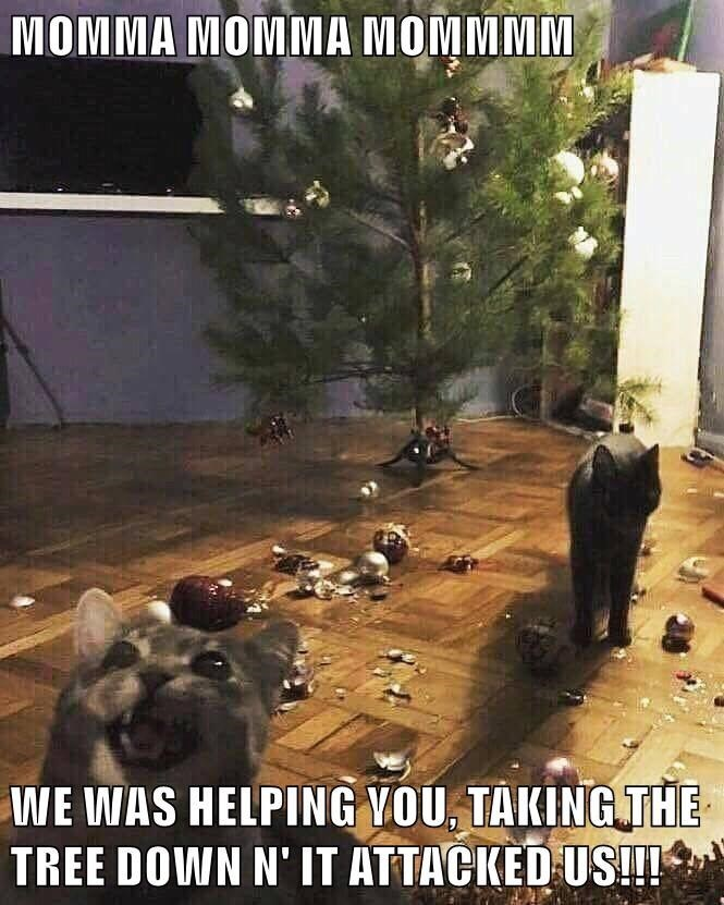 Sky - MOMMA MOMMA MOMMMM WE WAS HELPING VOU, TAKING THE TREE DOWN N'IT ATTACKED US!!!