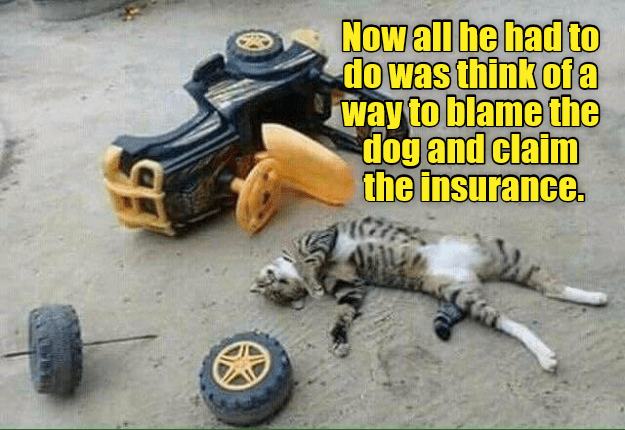 Automotive tire - Now all he had to do was think ofa way to blame the dog and claim the insurance.