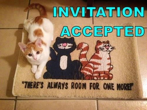 """Cat - INVITATION ACCEPTED """"THERE'S ALWAYS ROOM FOR ONE MORET"""