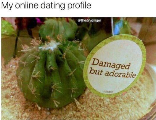 Cactus - My online dating profile @thedryginger Damaged but adorable HISA