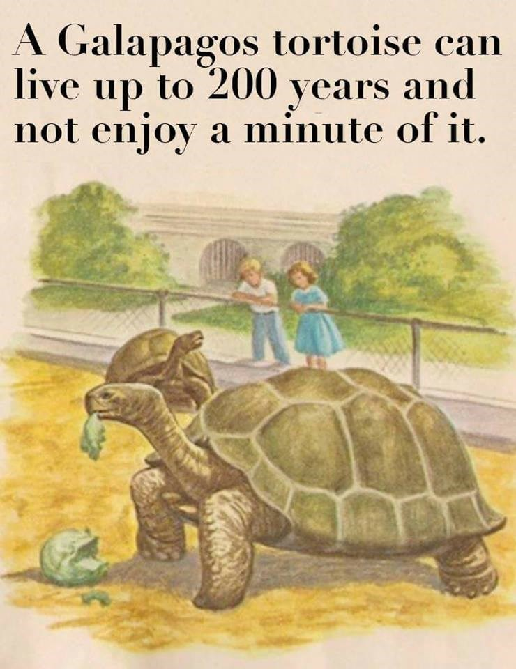 Tortoise - A Galapagos tortoise can live up to 200 years and not enjoy a minute of it.