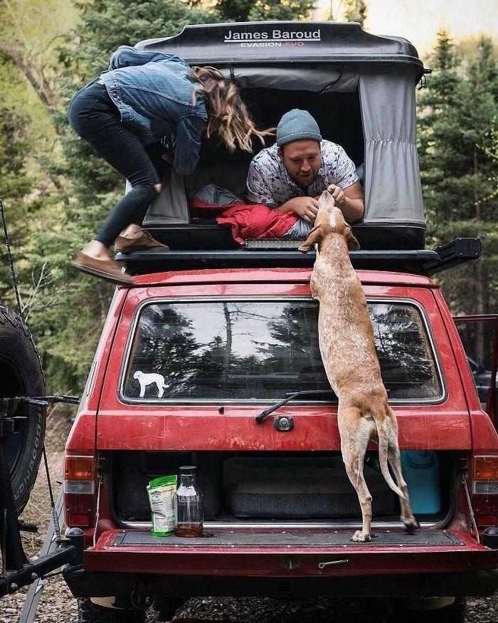 Dog - James Baroud EVASION VO