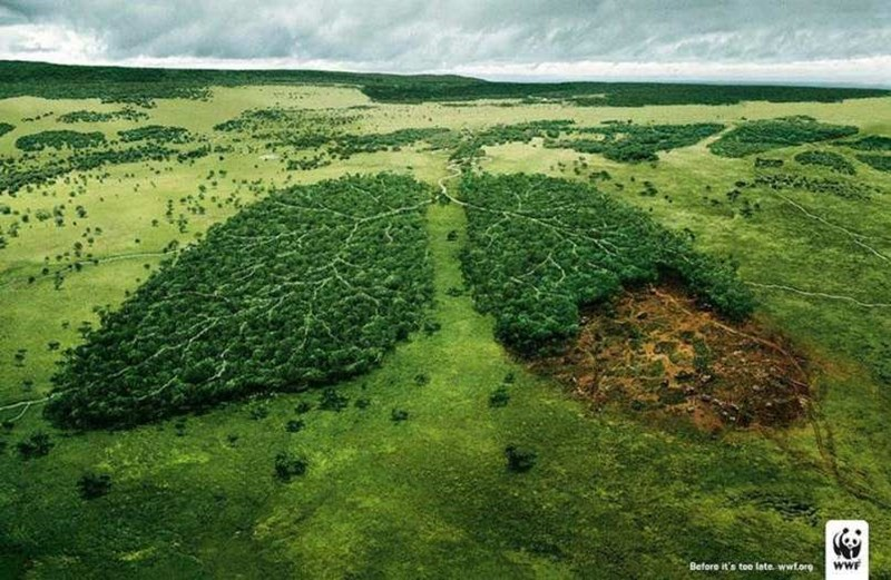 Natural landscape - wwF Before it's too late. wwf.org