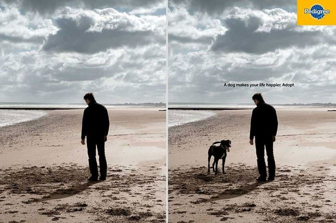Shore - Pedigree A dog makes your life happier Adopt