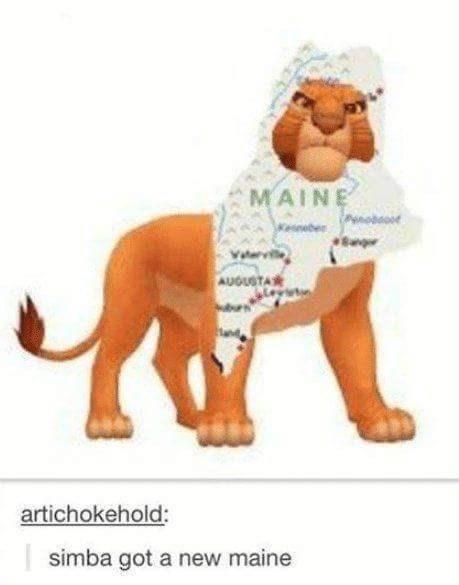 pun - Animal figure - MAINE AUGUSTA artichokehold: simba got a new maine