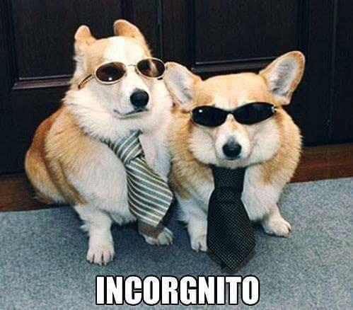 pun - Mammal - INCORGNITO