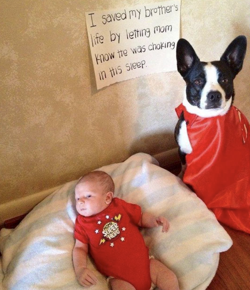 wholesome meme of a dog that saved a baby's life