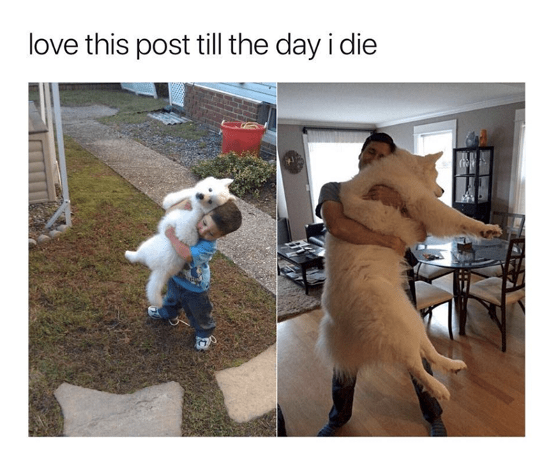 wholesome meme of a dog as a puppy and then full grown