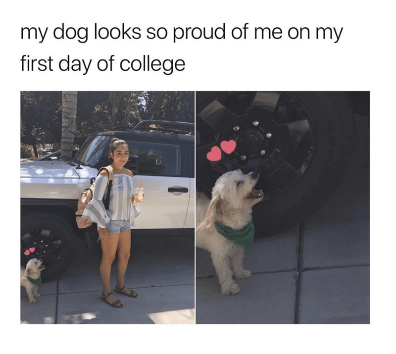 wholesome meme of a dog watching a girl on her first day of college