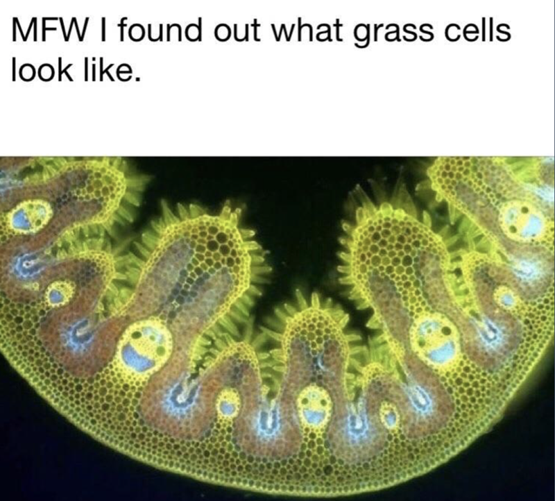 wholesome meme of what grass cells look like