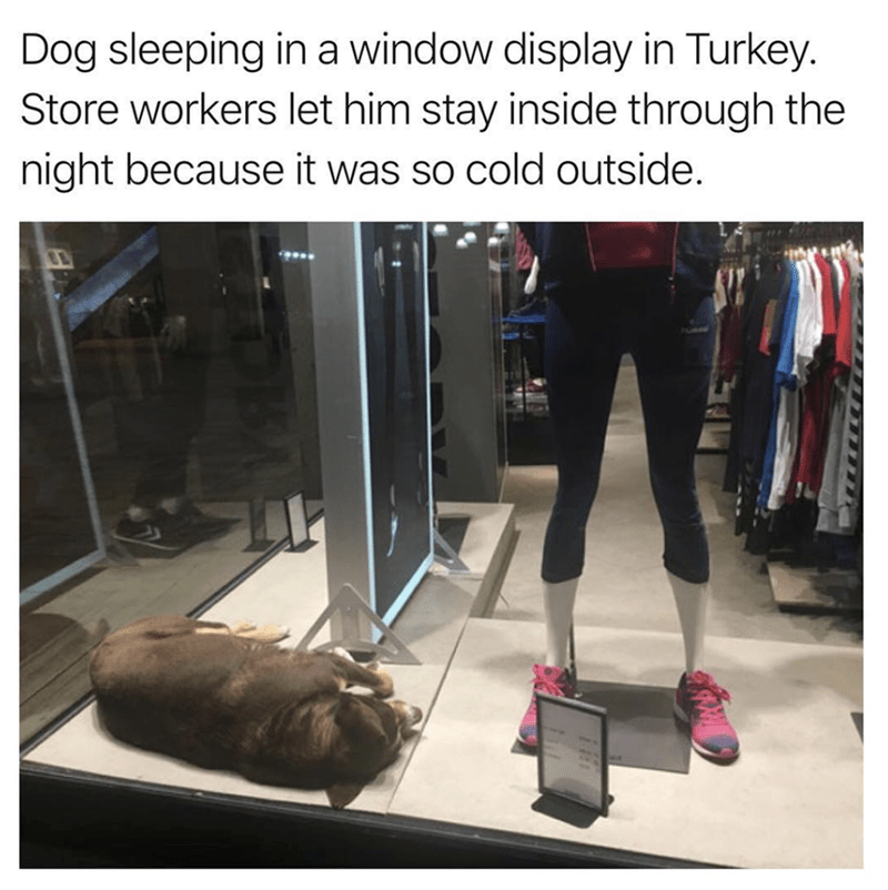 wholesome meme of a dog that slept inside a store because it was cold